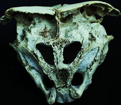 eirian skull.jpg